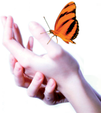 reikiflow-hand-butterfly-450px.png